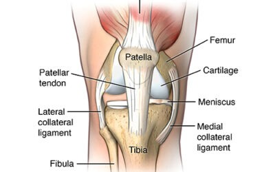 What is the Meniscus and what role does it play in the knee?