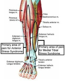 Image result for anatomy of the shin