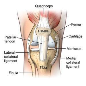 Image result for patellar tendonitis